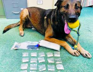K-9 Bowie poses with his findings after Saturday's stop on the Cherohala Skyway. Photo courtesy of Graham County Sheriff's Office
